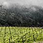 2012 Doc's Ranch Pinot Noir