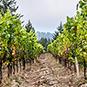 2014 Mohrhardt Ridge Vineyard Cabernet Sauvignon