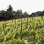 2014 Hagan Vineyard Pinot Noir