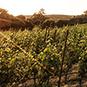 2012 Heaven & Earth Pinot Noir