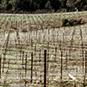 2012 Hagan Chardonnay
