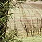 2012 Zephyr Farms Chardonnay