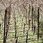 2012 Zephyr Farms Pinot Noir